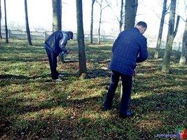 Аварійні дерева у Сестринівці